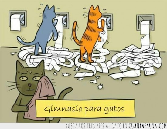 gatos,gimnasio,gym,higienico,papel,rollo