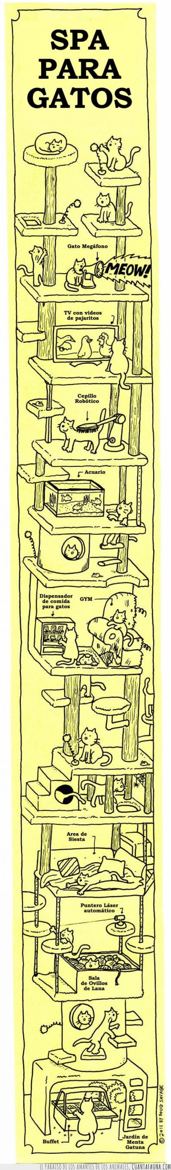 dormir,gatos,hotel,juegos,lana,laser,masaje,raton,spa