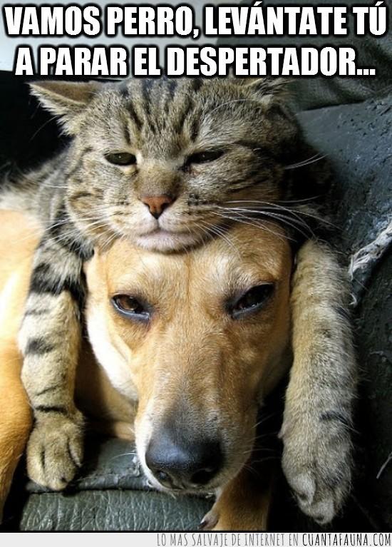 cansado,despertador,dormir,gato,ojeras,perro,sueño
