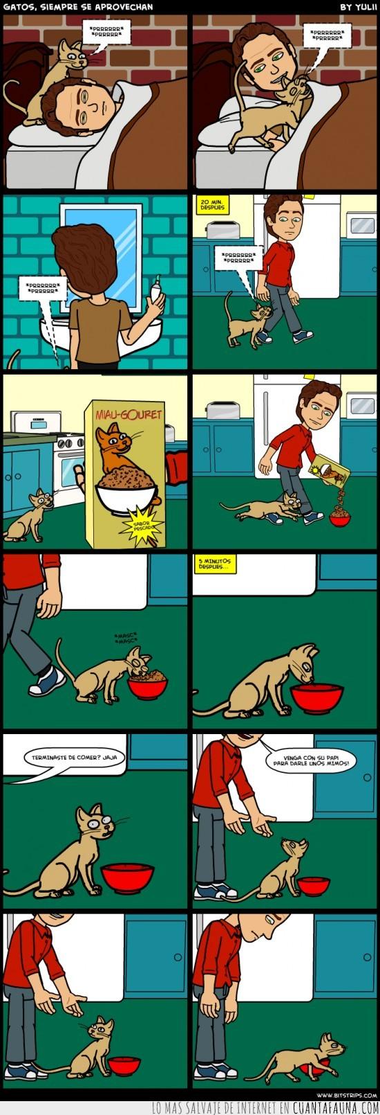 aprovecharse,comer,comic,dueño,gato,ignorar,ronronear