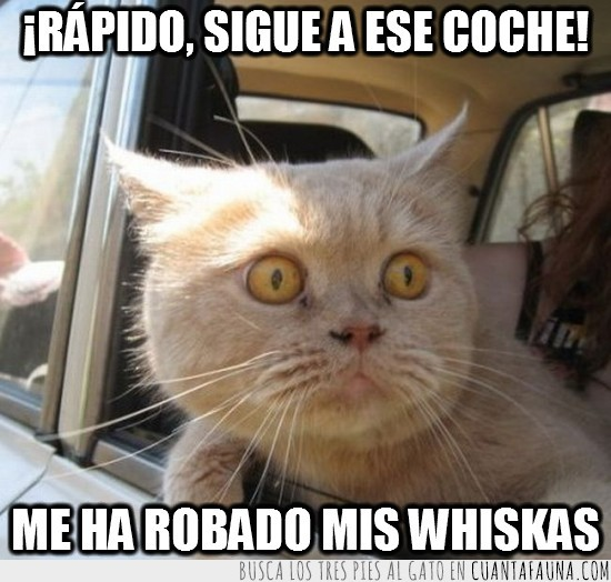 coche,robado,robar,seguir,sigue,speed face,viento,whiskas