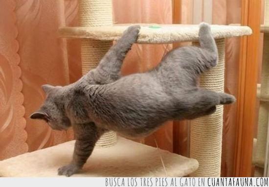 acrobacia,equilibrio,gato,parkour,poste,rascar,truco