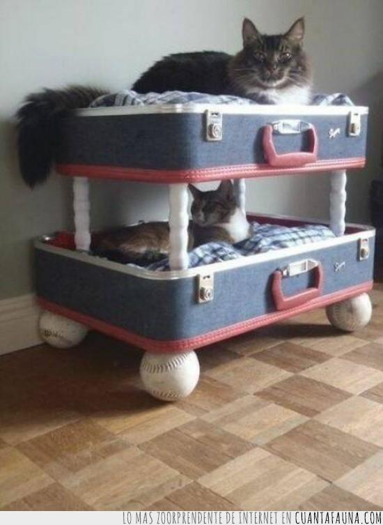 baseball,cama,gatos,litera,maleta,palos,pelotas