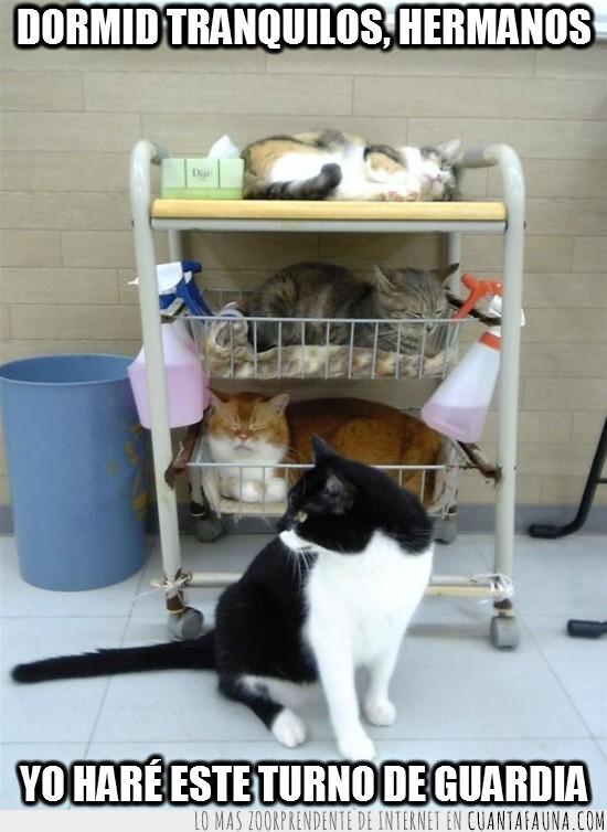apilados,bandejas,cocina,estantes,gatos,guardia,mueble,turno