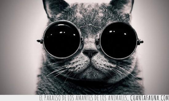 gafas,Gato,imagine,john lennon,sol