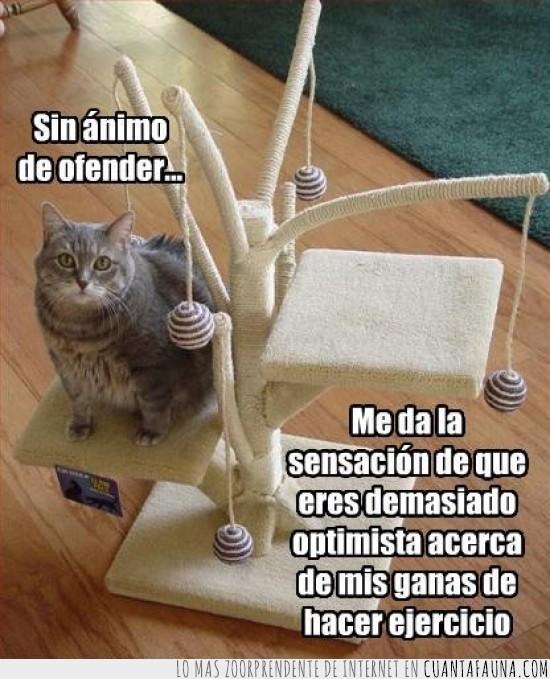 ejercicio,ganas,gato,juguete,ofender,optimista
