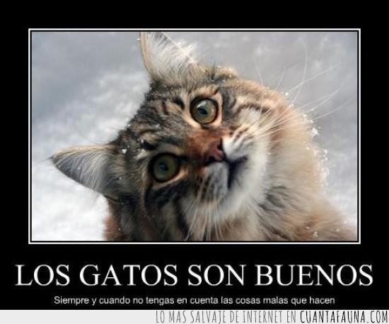buenos,Gatos,malos