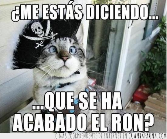 acabado,acabar,borracho,capitán,gato,pirata,ron