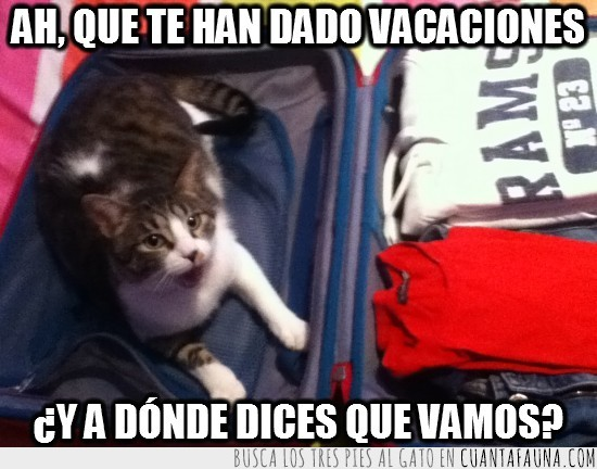 gato,maleta,vacaciones,vamos,viaje