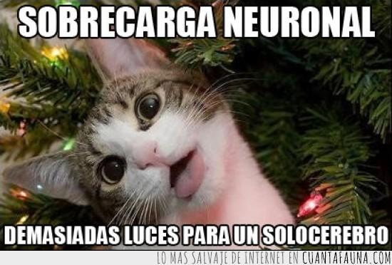 adornos,arbol de navidad,gato,luces,navidad,navideño,neuronal,sobrecarga