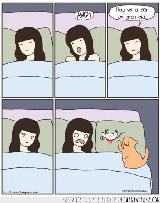 almohada,buenos días,muerto,ratón,sangre,trofeo