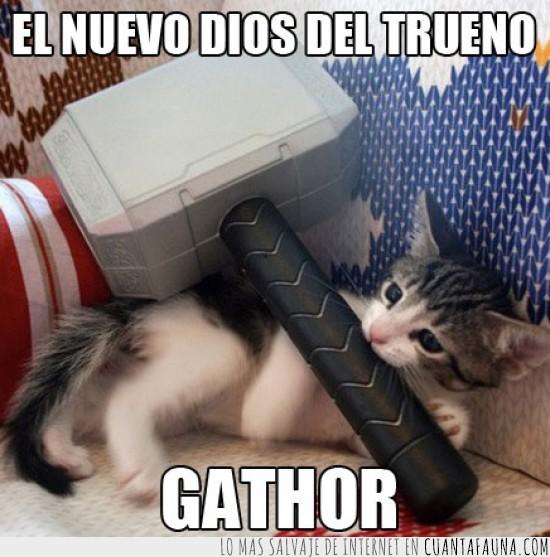 dios,gathor,gato,martillo,nuevo,sofa,thor,trueno