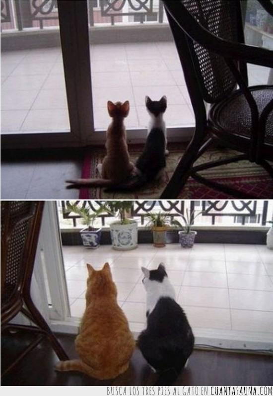 amigos,amistad,amor,gatos,observando,tiempo,ventana,vida