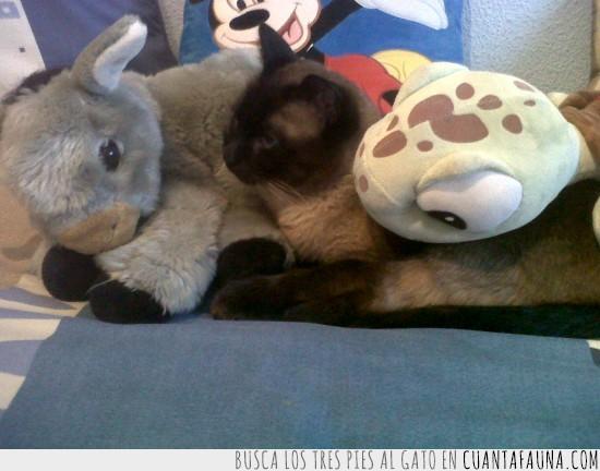 burro,escondido,gato,muñecos,peluches,tortuga