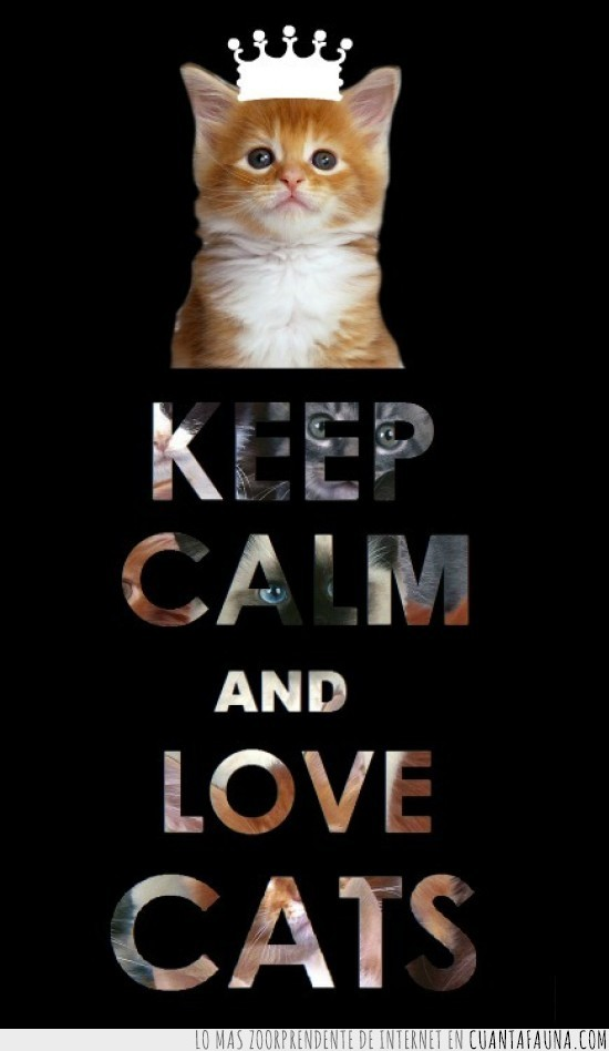 corona,gato,keep calm,naranja
