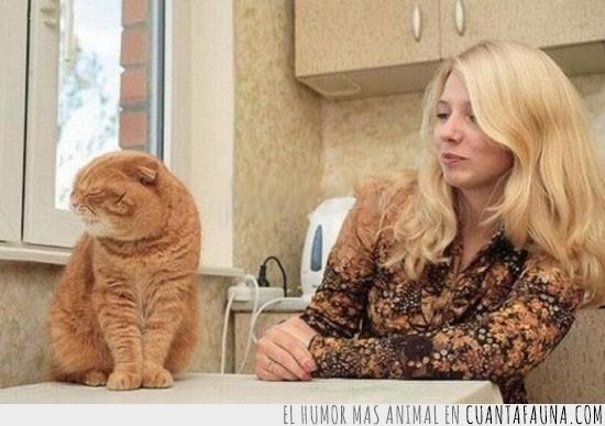 enfadado,gato,gordo,hablar,indignado,rubia