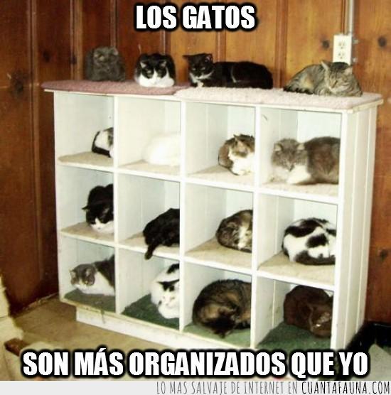 acostados,exped-it,gatos,habitaciones,mueble,organizados