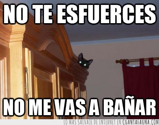 armario,bañar,baño,escondido,gato,ninja