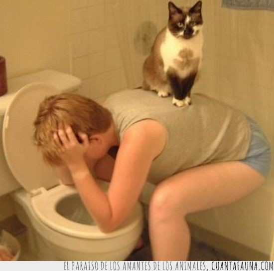 cuidar,gato,responsable,retrete,vater,vomitar