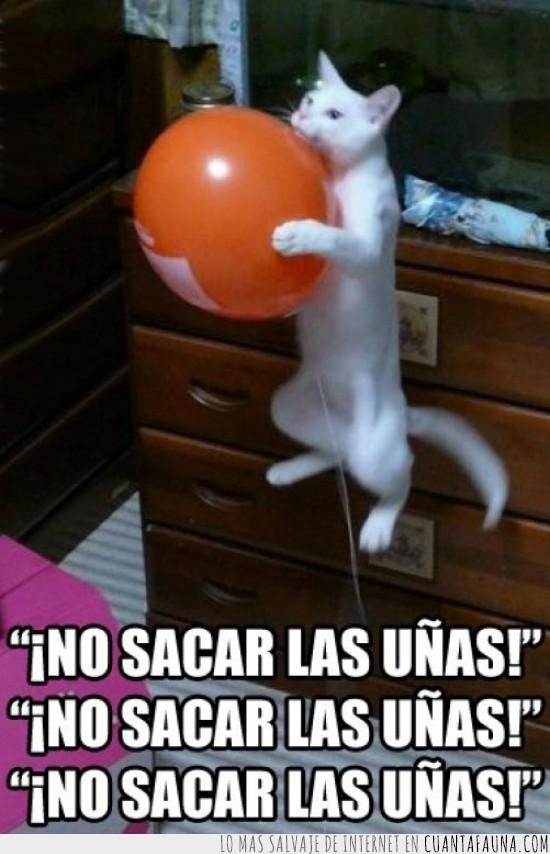 gato,globo,helio,problema,uñas