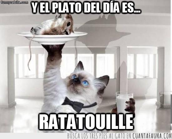 camarero,gato,negro,pajarita,plato,ratatouille,vaso de leche