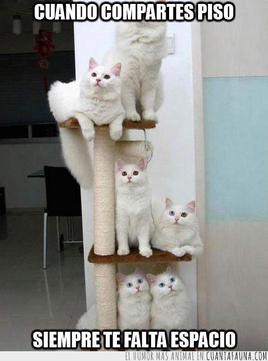 compartir piso,escultura,espacio,gatos,juguete,juntos,parejas