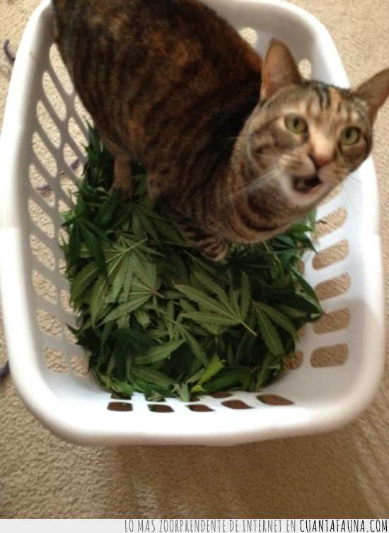 drogado,gato,hojas,marihuana,planta