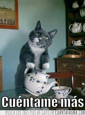contar,explicar,gato,taza,te,tetera