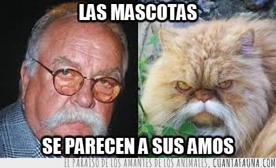bigotes,hombre mayor,parecidos,viejo