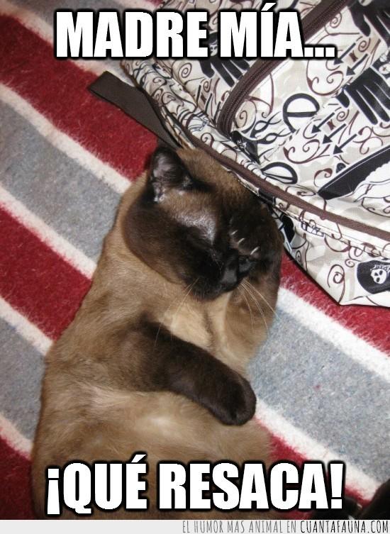 facepalm,gato,mochila,resaca,skoty