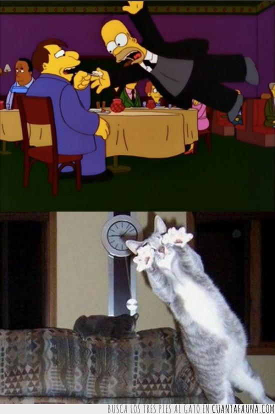 gato,guardaespaldas,homer simpson,proteger,salvar