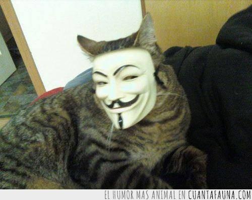 anonimous,cat,gato,gatónimous,guy,mascara,vendetta