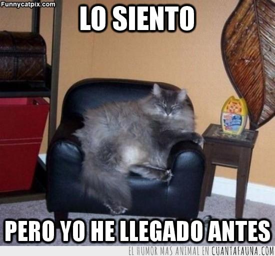 antes,Dormir,Gato,llegar,Mesilla,sillon,Sofá