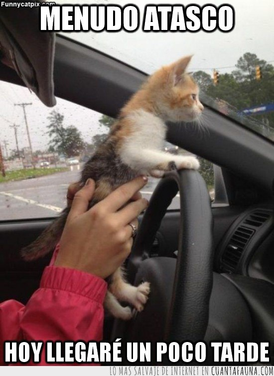 Atasco,Conducir,Gato,Llegar Tarde,Lluvia,Trabajo