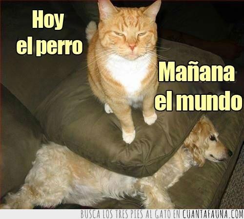 aplastado,aplastar,cojin,gato,hoy,mañana,mundo,perro,sofa
