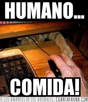computadora,Gato,mano,ordenador,pata,raton,uñas