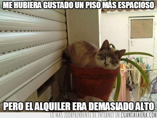 alquiler,gato,maceta,mío,piso,planta