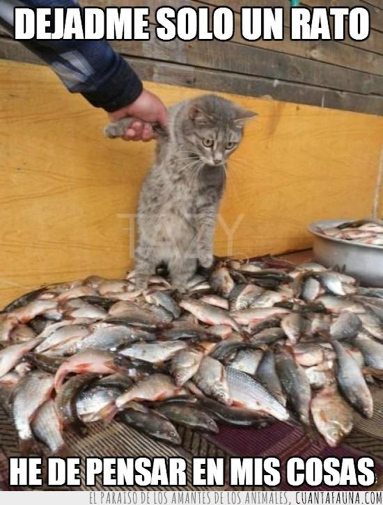 absorto,comida,gato,peces,pescado,pescao