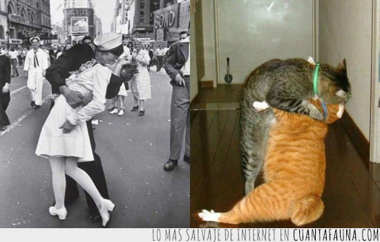 beso,enamorados,gatos,new york,the kiss,times square,v-day