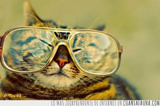 feliz,gafas,Gato,reflejo,sol