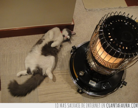 acostado,calor,estufa,gato,gordo,relajado