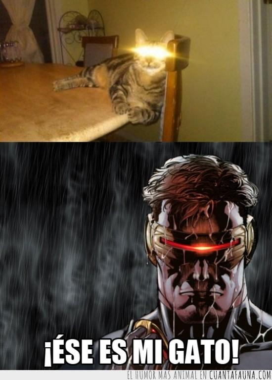 ciclope,defensa,disparar,gato,laser,ojos,rayo,xmen