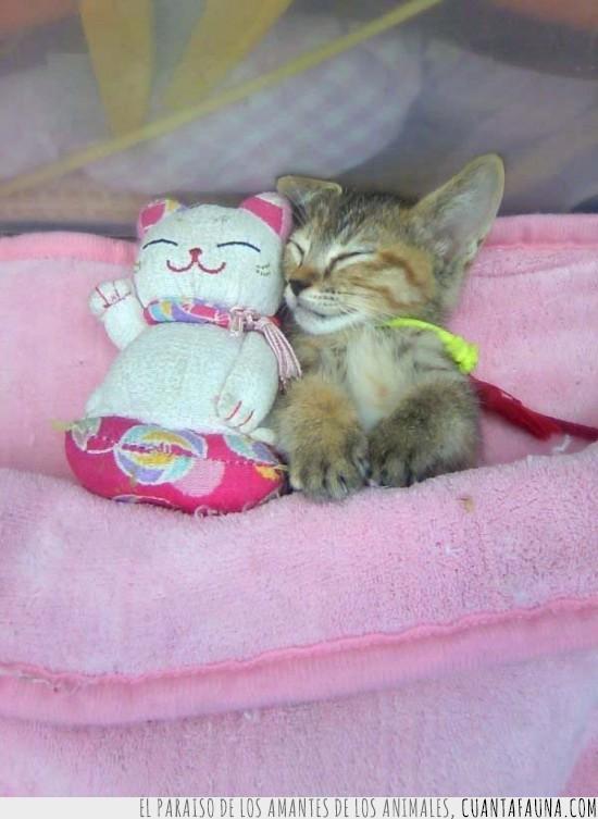 amor,gato,muñeco,pareja,peluche