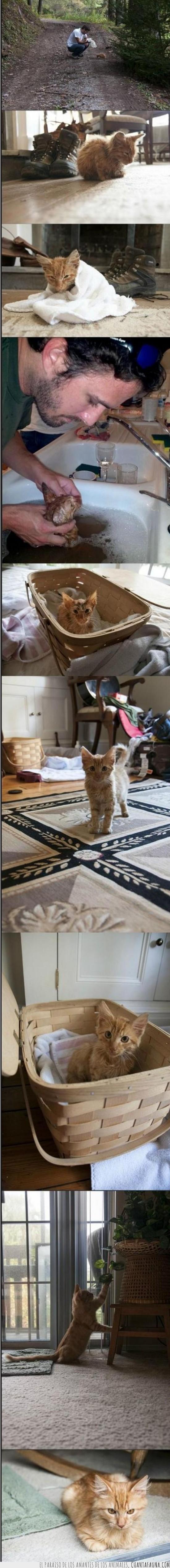adopcion,amigo,gatito,gato salvado,mono,monte,sucio