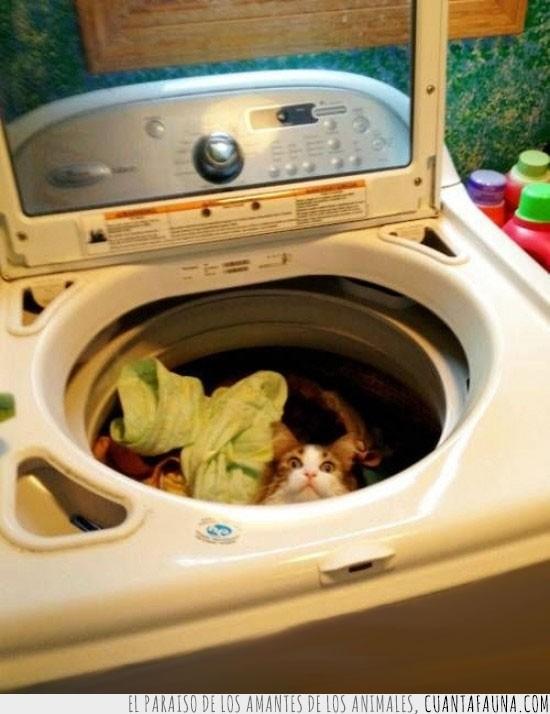 agua,cita,gato,lavadora,lavar,programa rapido,vueltas
