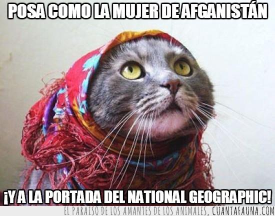 afganistan,foto famosa,gato,mujer afgana,national geographic,portada