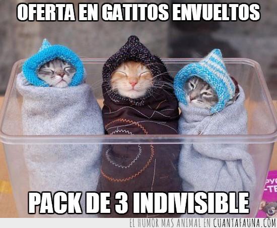 envueltos,frío,gatitos,gatos,pack de 3 indivisible,saco de dormir,tapados