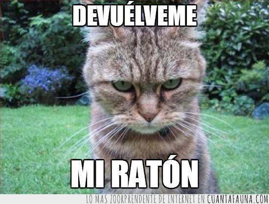 cabreado,devuélveme,enfadado,gato,mosqueado,ratón
