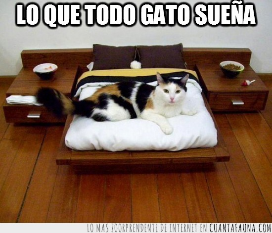 adaptada,cama,escala,habitacion,medida,muebles,pequeña