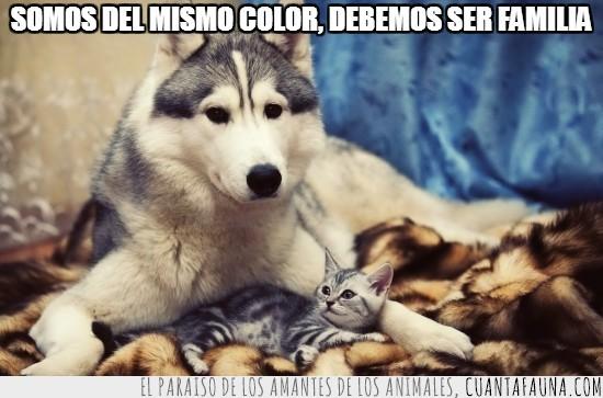familia,Gato,juntos,mismo color,Perro